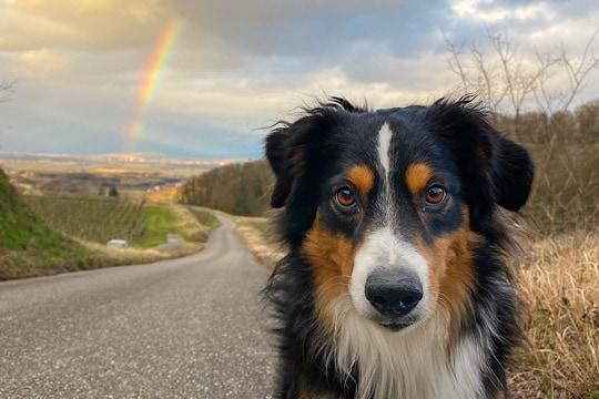 Hund mit regenbogen