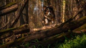 Hund springt im Wald