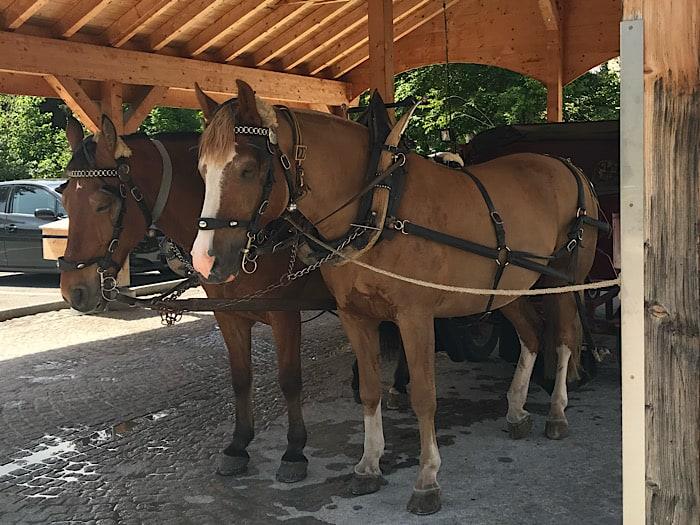 Unsere Pferdekutsche