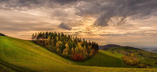 Wald Scheelinger Matte