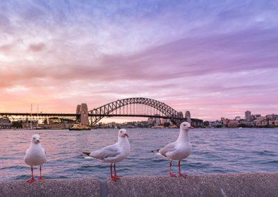 australien harbour bridge moeven
