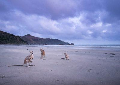australien kaenguru gruppe drei
