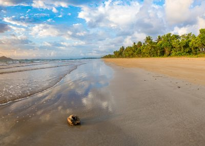 australien strand kokusnuss
