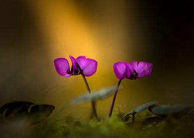 bluete beleuchtet lila