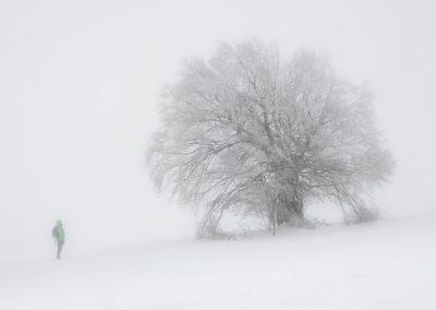 fotograf nebel baum winter
