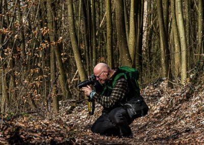 fotografen baeume laub wald