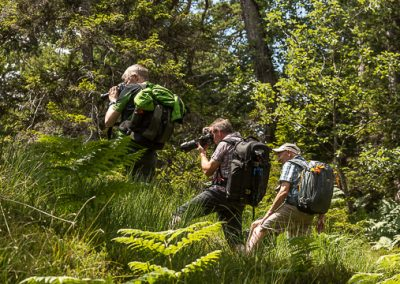 fotografen farn wald alpen