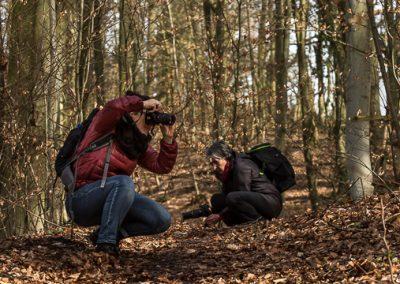 fotografen laub wald