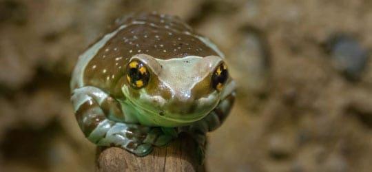 Frosch Ast