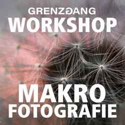grenzgang makrofotografie