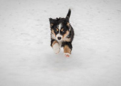 hund sky garten schnee