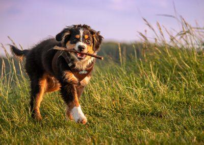 hund sky stoeckchen kaiserstuhl