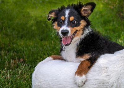 Hund Sky Verrueckter Blick