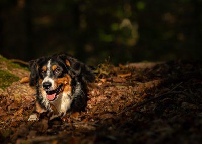 hund sky wald liegt spot