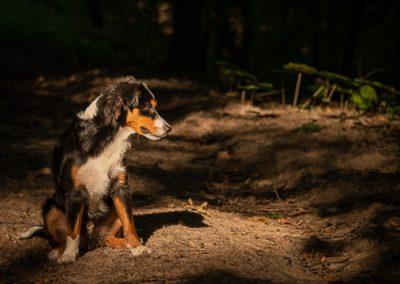 hund sky wald sonne