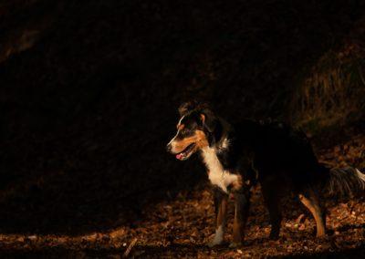hund sky wald sonne spot