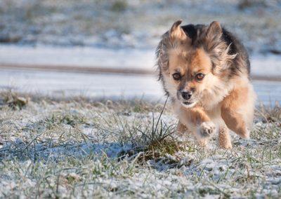 hund svenja schnee rennen