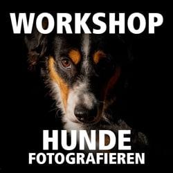 hunde fotografieren