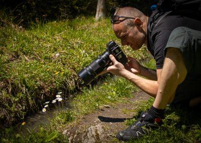 kamera makro alpen wiese