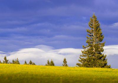 kandel kiefer blaue wolken
