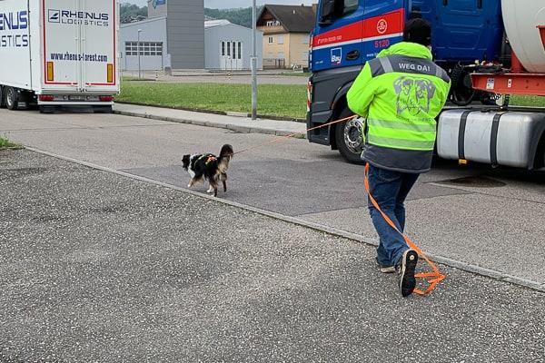 Mantrailing für Angsthunde