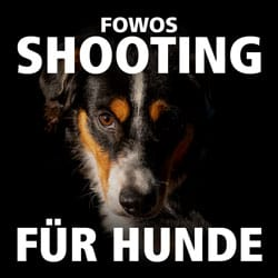 shooting hunde