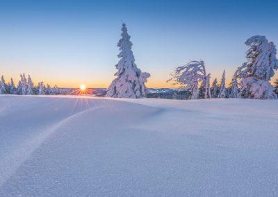 sonnenstern schnee baum