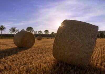 Strohballen Sonnenstern Feld