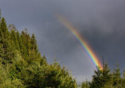 wald regenbogen wolken