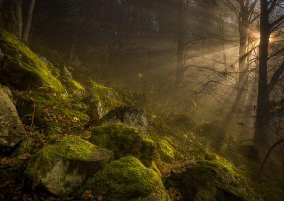 Wald Sonnenstrahlen Kandel
