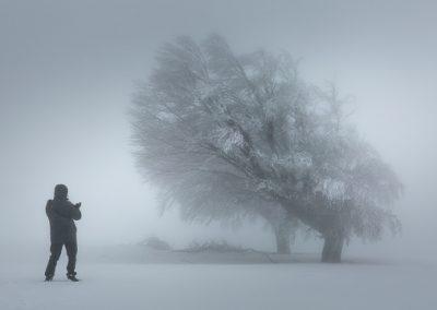 windeiche mit fotograf winter