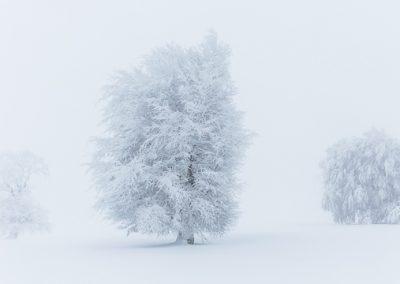 winter baum windeiche schauinsland
