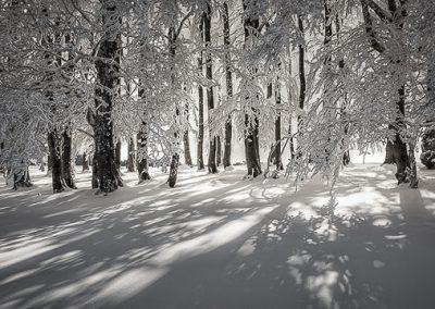 winterlandschaft baeume schnee