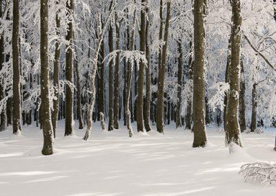 winterwald schnee eis